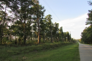 131 Acres Clay County Hunting / Timber Investment in Clay, GA (23 of 79)