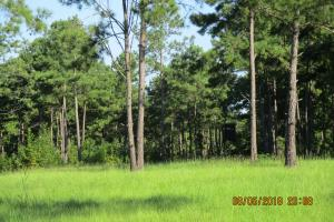 131 Acres Clay County Hunting / Timber Investment in Clay, GA (44 of 79)