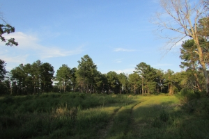131 Acres Clay County Hunting / Timber Investment in Clay, GA (40 of 79)