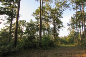 131 Acres Clay County Hunting / Timber Investment in Clay, GA (41 of 79)