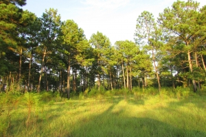 131 Acres Clay County Hunting / Timber Investment in Clay, GA (42 of 79)