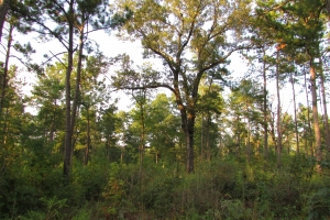 131 Acres Clay County Hunting / Timber Investment in Clay, GA (43 of 79)