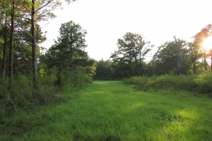 131 Acres Clay County Hunting / Timber Investment in Clay, GA (32 of 79)