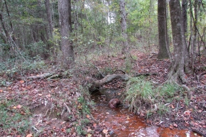 131 Acres Clay County Hunting / Timber Investment in Clay, GA (30 of 79)