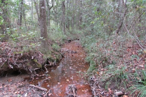 131 Acres Clay County Hunting / Timber Investment in Clay, GA (31 of 79)
