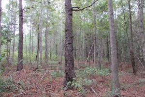 131 Acres Clay County Hunting / Timber Investment in Clay, GA (33 of 79)