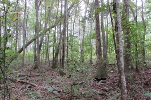 131 Acres Clay County Hunting / Timber Investment in Clay, GA (34 of 79)