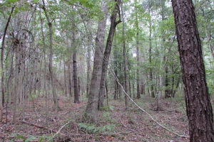 131 Acres Clay County Hunting / Timber Investment in Clay, GA (35 of 79)