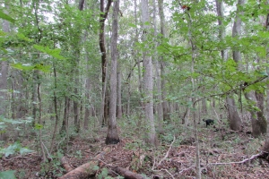 131 Acres Clay County Hunting / Timber Investment in Clay, GA (36 of 79)