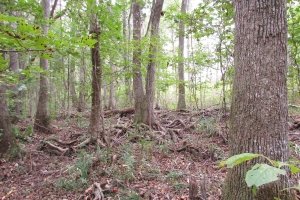 131 Acres Clay County Hunting / Timber Investment in Clay, GA (37 of 79)