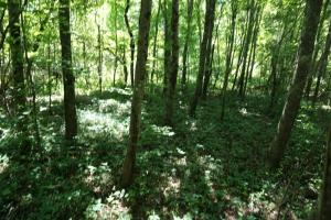 Osborn Creek Hunting and Timber Tract - Perry County AL