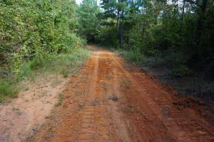 Osborn Creek Hunting and Timber Tract in Perry, AL (3 of 12)