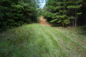 Osborn Creek Hunting and Timber Tract in Perry, AL (4 of 12)