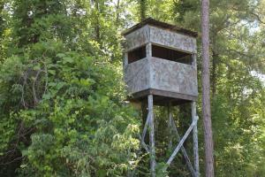 Sulligent Hunting and Timber Investment - Lamar County AL