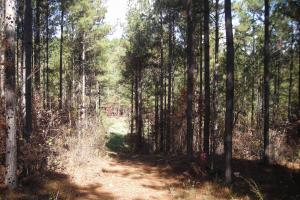 NW Polk Co. Timber Tract (36 Acres) in Polk, GA (6 of 15)