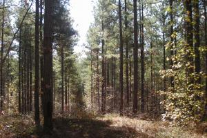 NW Polk Co. Timber Tract (36 Acres) in Polk, GA (11 of 15)