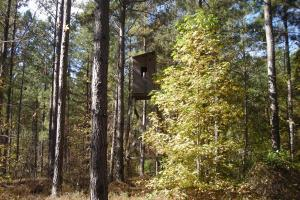 NW Polk Co. Timber Tract (36 Acres) in Polk, GA (14 of 15)