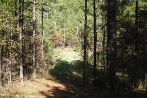 NW Polk Co. Timber Tract (36 Acres) in Polk, GA (15 of 15)