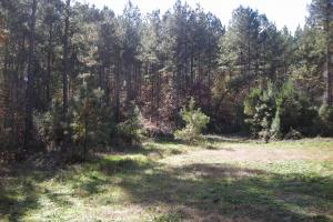 NW Polk Co. Timber Tract (36 Acres) in Polk, GA (7 of 15)
