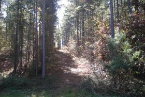 NW Polk Co. Timber Tract (36 Acres) - Polk County GA