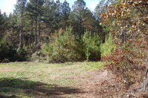 NW Polk Co. Timber Tract (36 Acres) in Polk, GA (12 of 15)