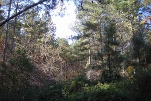 NW Polk Co. Timber Tract (36 Acres) in Polk, GA (8 of 15)