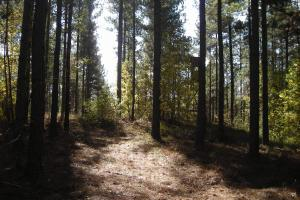 NW Polk Co. Timber Tract (36 Acres) in Polk, GA (10 of 15)