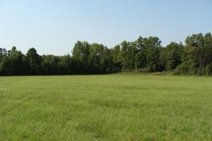 46 +/- acre Recreational Pasture/Hunting tract with cabin - White County AR