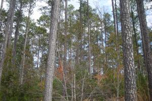 Judd Road Timber Tract (32 Acres) - Haralson County GA