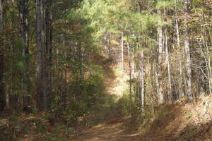 James Wood Rd Timber Tract (80.75 Acres) in Haralson, GA (7 of 11)