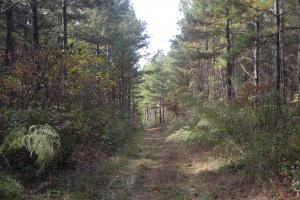 James Wood Rd Timber Tract (80.75 Acres) in Haralson, GA (11 of 11)