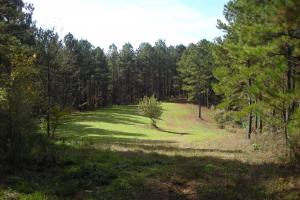 James Wood Rd Timber Tract (80.75 Acres) in Haralson, GA (8 of 11)