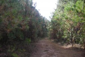 James Wood Rd Timber Tract (80.75 Acres) in Haralson, GA (2 of 11)