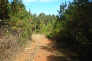 James Wood Rd Timber Tract (80.75 Acres) in Haralson, GA (3 of 11)