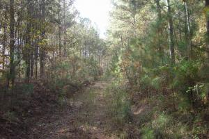 James Wood Rd Timber Tract (80.75 Acres) in Haralson, GA (4 of 11)
