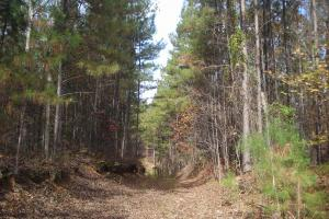 James Wood Rd Timber Tract (80.75 Acres) in Haralson, GA (5 of 11)