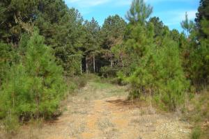 James Wood Rd Timber Tract (80.75 Acres) in Haralson, GA (6 of 11)