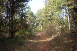 James Wood Rd Timber Tract (80.75 Acres) in Haralson, GA (9 of 11)