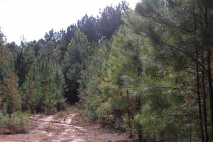 Edna Road Timber Tract (64 Acres) in Haralson, GA (11 of 15)