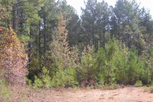 Edna Road Timber Tract (64 Acres) in Haralson, GA (13 of 15)