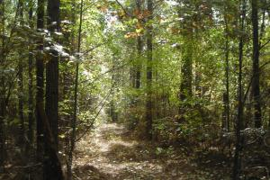 Edna Road Timber Tract (64 Acres) in Haralson, GA (14 of 15)
