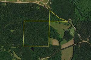 Roanoke Timber Investment - Randolph County AL