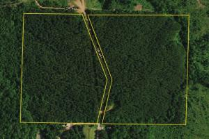 County Road 461 Timber and Recreation Property - Randolph County AL