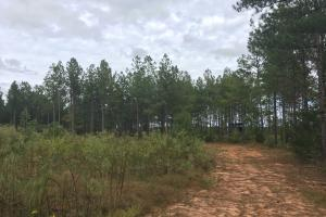 Secluded Hunting Getaway - Taliaferro County GA