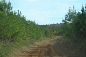 Hwy 120/Biggers Road Timber Tract (186+ Acres)