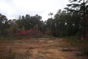 Blue Road Timber Tract (150 Acres) in Haralson, GA (4 of 20)