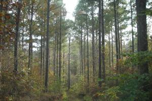 Blue Road Timber Tract (150 Acres) - Haralson County GA