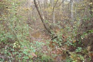 Blue Road Timber Tract (150 Acres) in Haralson, GA (14 of 20)