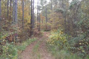 Blue Road Timber Tract (150 Acres) in Haralson, GA (6 of 20)