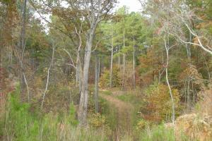 Blue Road Timber Tract (150 Acres) in Haralson, GA (15 of 20)
